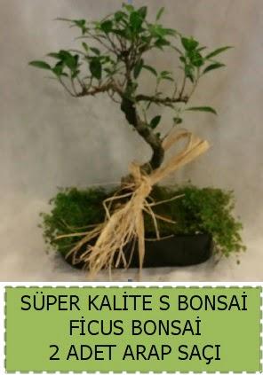 Ficus S Bonsai ve arap saçı  Bingöl Gölüm Çiçek çiçekçi telefonları