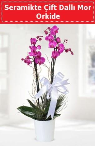 Seramikte Çift Dallı Mor Orkide  Bingöl Gölüm Çiçek anneler günü çiçek yolla