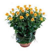 Bingöl Gölüm Çiçek cicekciler , cicek siparisi  10 adet sari gül tanzim cam yada mika vazoda çiçek