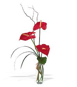 Bingöl Gölüm Çiçek çiçek siparişi sitesi  cam yada mika Vazoda 3 adet  antoryum