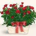 Bingöl Gölüm Çiçek İnternetten çiçek siparişi  11 adet kirmizi gül sepette