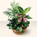 Bingöl Gölüm Çiçek çiçek satışı  5 adet canli çiçek sepette