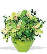 cam yada mika vazoda 5 adet orkide   Bingöl Gölüm Çiçek online çiçekçi , çiçek siparişi