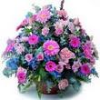 karisik mevsim kir çiçekleri  Bingöl Gölüm Çiçek çiçek gönderme sitemiz güvenlidir