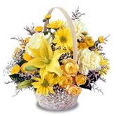 sadece sari çiçek sepeti   Bingöl Gölüm Çiçek çiçek gönderme sitemiz güvenlidir