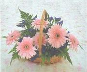 gerbera çiçeklerinde sepet   Bingöl Gölüm Çiçek çiçek yolla