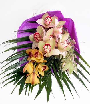 Bingöl Gölüm Çiçek cicekciler , cicek siparisi  1 adet dal orkide buket halinde sunulmakta