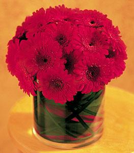 Bingöl Gölüm Çiçek ucuz çiçek gönder  23 adet gerbera çiçegi sade ve sik cam içerisinde
