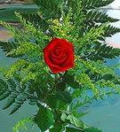 1 adet kirmizi gül buketi   Bingöl Gölüm Çiçek çiçek siparişi vermek