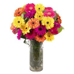 KARISIK GERBERALARDAN CAM VAZO TANZIMI  Bingöl Gölüm Çiçek güvenli kaliteli hızlı çiçek