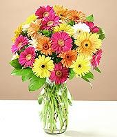 Bingöl Gölüm Çiçek çiçek online çiçek siparişi  17 adet karisik gerbera