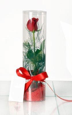 Bingöl Gölüm Çiçek çiçek yolla  Silindir vazoda tek kirmizi gül