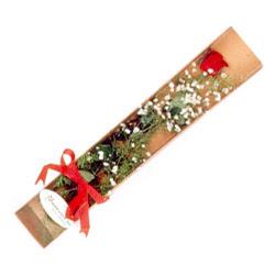 Bingöl Gölüm Çiçek çiçek , çiçekçi , çiçekçilik  Kutuda tek 1 adet kirmizi gül çiçegi