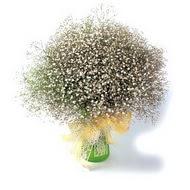 Bingöl Gölüm Çiçek çiçek mağazası , çiçekçi adresleri  cam yada mika vazo içerisinde cipsofilya demeti