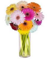 Bingöl Gölüm Çiçek internetten çiçek siparişi  Farkli renklerde 15 adet gerbera çiçegi
