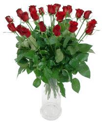 Bingöl Gölüm Çiçek çiçekçi telefonları  11 adet kimizi gülün ihtisami cam yada mika vazo modeli