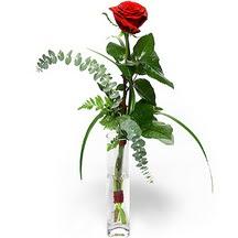 Bingöl Gölüm Çiçek 14 şubat sevgililer günü çiçek  Sana deger veriyorum bir adet gül cam yada mika vazoda