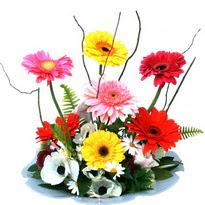 Bingöl Gölüm Çiçek hediye çiçek yolla  camda gerbera ve mis kokulu kir çiçekleri