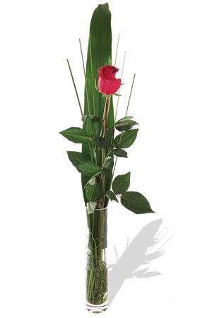 1 adet cam vazo içerisinde kirmizi gül  Bingöl Gölüm Çiçek çiçek , çiçekçi , çiçekçilik
