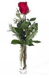 Vazo içerisinde 1 adet kirmizi gül  Bingöl Gölüm Çiçek cicekciler , cicek siparisi