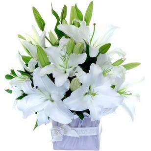 Bingöl Gölüm Çiçek çiçek yolla  2 dal cazablanca vazo çiçeği