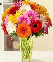 Bingöl Gölüm Çiçek çiçek servisi , çiçekçi adresleri  15 adet gerbera çiçek vazosu