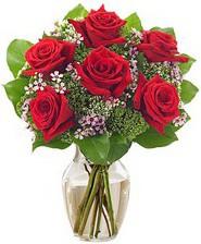 Kız arkadaşıma hediye 6 kırmızı gül  Bingöl Gölüm Çiçek internetten çiçek siparişi