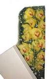 Bingöl Gölüm Çiçek çiçek gönderme  Kutu içerisine dal cymbidium orkide