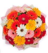 15 adet renkli gerbera buketi  Bingöl Gölüm Çiçek yurtiçi ve yurtdışı çiçek siparişi