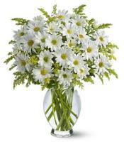 Vazo içerisinde beyaz krizantem çiçekleri  Bingöl Gölüm Çiçek çiçekçi mağazası