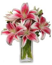 Vazo içerisinde 5 dal kazablanka çiçeği  Bingöl Gölüm Çiçek cicekciler , cicek siparisi