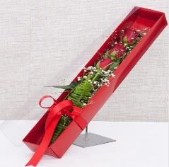 Kutu içerisinde 3 adet kırmızı gül  Bingöl Gölüm Çiçek online çiçek gönderme sipariş