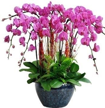 9 dallı mor orkide  Bingöl Gölüm Çiçek 14 şubat sevgililer günü çiçek
