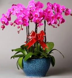 7 dallı mor orkide  Bingöl Gölüm Çiçek çiçek online çiçek siparişi