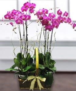 4 dallı mor orkide  Bingöl Gölüm Çiçek güvenli kaliteli hızlı çiçek