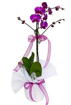 Tek dallı mor orkide  Bingöl Gölüm Çiçek çiçekçi telefonları