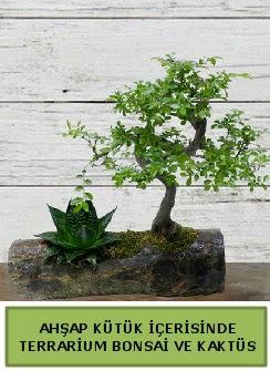 Ahşap kütük bonsai kaktüs teraryum  Bingöl Gölüm Çiçek internetten çiçek siparişi