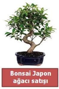 Japon ağacı bonsai satışı  Bingöl Gölüm Çiçek çiçek siparişi sitesi