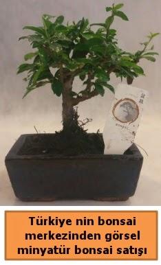 Japon ağacı bonsai satışı ithal görsel  Bingöl Gölüm Çiçek çiçek yolla