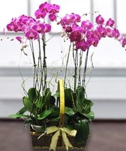 7 dallı mor lila orkide  Bingöl Gölüm Çiçek çiçek gönderme sitemiz güvenlidir