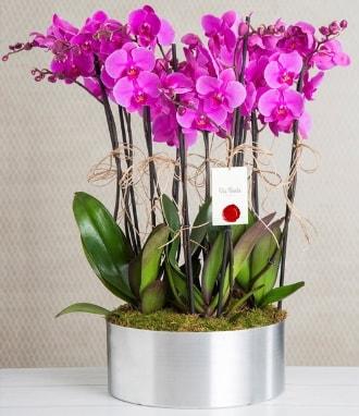 11 dallı mor orkide metal vazoda  Bingöl Gölüm Çiçek çiçek gönderme sitemiz güvenlidir