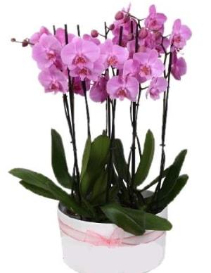 Beyaz seramik içerisinde 7 dallı mor orkide  Bingöl Gölüm Çiçek çiçekçi telefonları