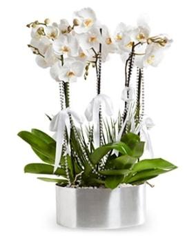 Beş dallı metal saksıda beyaz orkide  Bingöl Gölüm Çiçek çiçek yolla