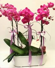 Beyaz seramik içerisinde 4 dallı orkide  Bingöl Gölüm Çiçek ucuz çiçek gönder