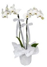 2 dallı beyaz orkide  Bingöl Gölüm Çiçek güvenli kaliteli hızlı çiçek