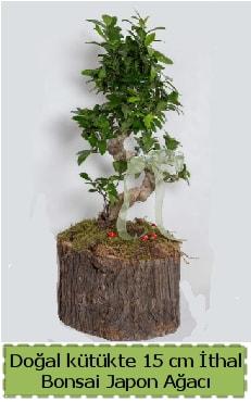 Doğal kütükte İthal bonsai japon ağacı  Bingöl Gölüm Çiçek çiçek gönderme