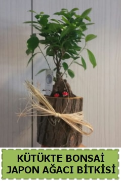 Kütük içerisinde doğal bonsai ağacı  Bingöl Gölüm Çiçek çiçekçi telefonları