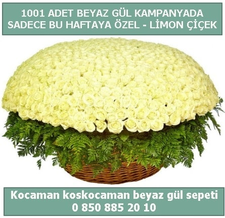 1001 adet beyaz gül sepeti özel kampanyada  Bingöl Gölüm Çiçek çiçek gönderme sitemiz güvenlidir