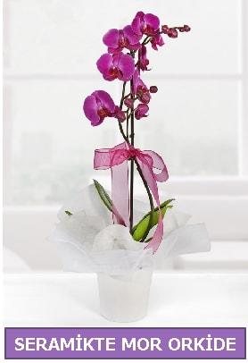 Seramik içerisinde birinci kalite tek dallı mor orkide  Bingöl Gölüm Çiçek İnternetten çiçek siparişi
