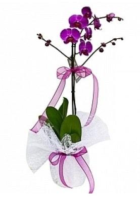Tekli Mor Orkide  Bingöl Gölüm Çiçek çiçek yolla